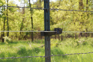 Electric Fenceing